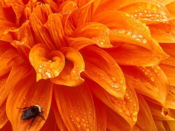 Sinekli turuncu çiçek