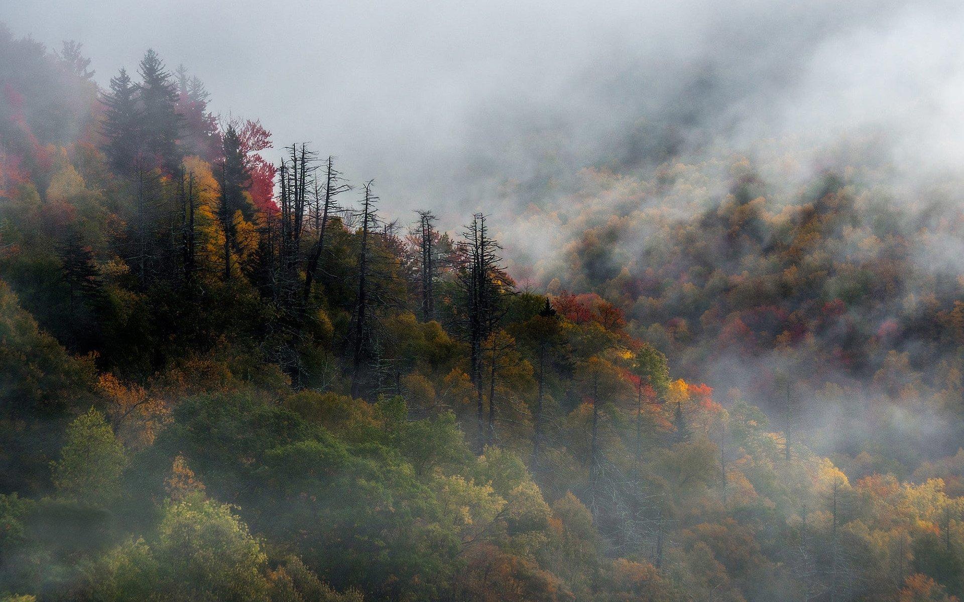 Sisli Orman Manzarası