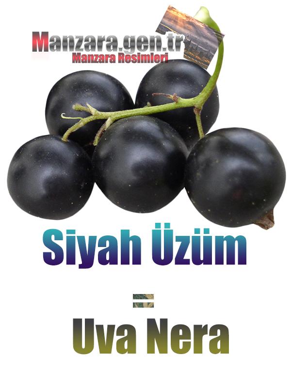 Siyah üzümün İtalyancası Nedir ? Siyah üzüm Nasıl Yazılır ? Che cos'è il turco in uva nera? Come scrivere uva nera in turco?