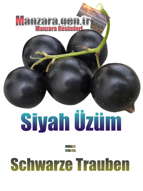 Almanca Meyve İsimleri - Siyah Üzümün Almancası Nedir ? Siyah Üzüm Almanca Nasıl Yazılır ? Was ist Schwarze Trauben Türkisch? Wie schreibe ich Schwarze Trauben auf Türkisch?