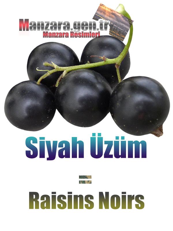 Fransızca Meyve İsimleri - Siyah üzümün Fransızcası Nedir ? Siyah üzüm Fransızca Nasıl Yazılır ? Quel est le turc de raisins noirs ? Comment écrire la raisins noirs en turc?