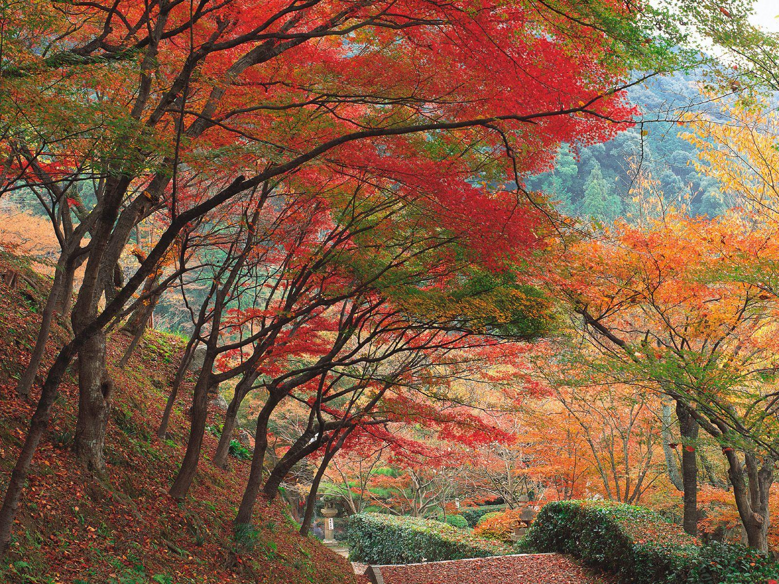 Sonbaharın rengarenk ağaçları