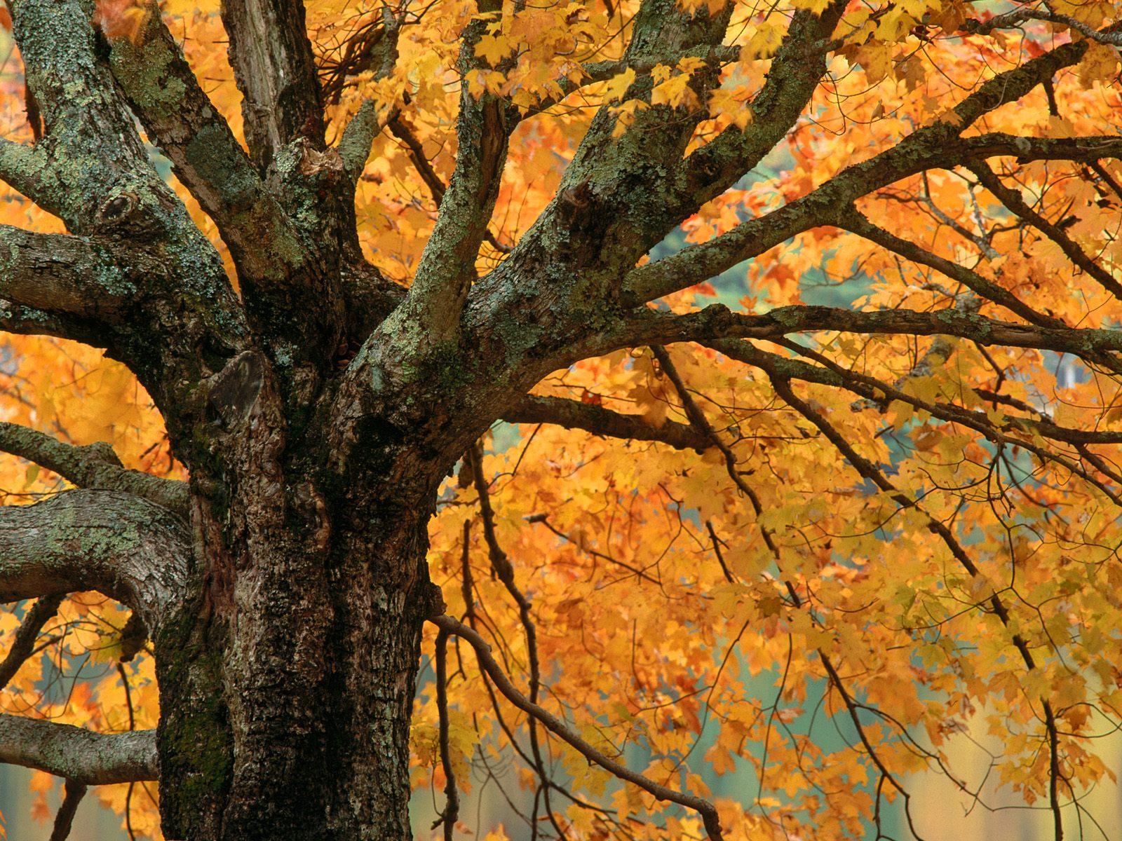 Sonbahardan Güzel Manzaralar - Sonbahar Ağacı