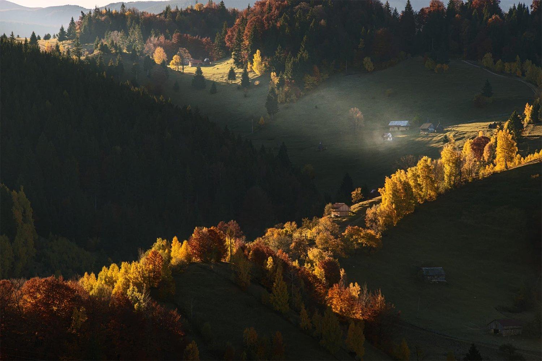 Sonbahar Ormanı