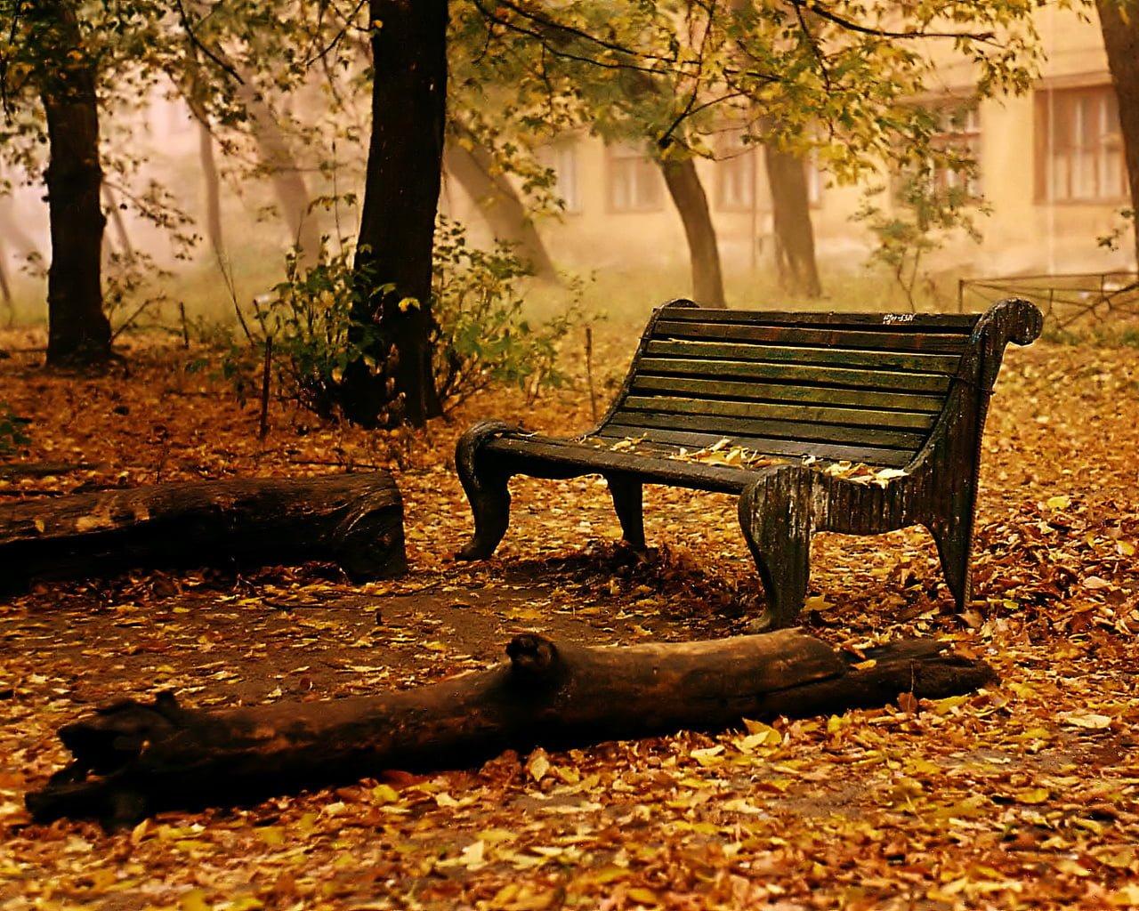 Sonbahardan Güzel Manzaralar - Sonbahar ve Bank