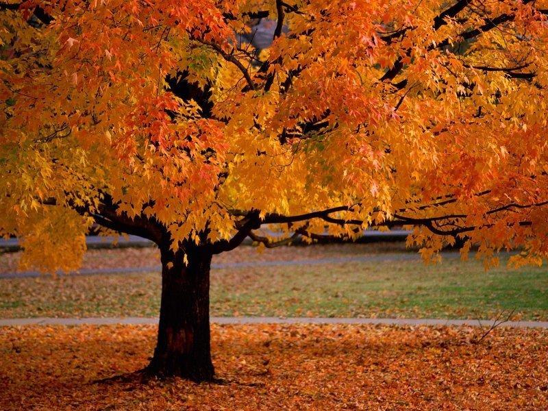 Sonbahardan Güzel Manzaralar - Sonbahar ve Güzel Ağaç