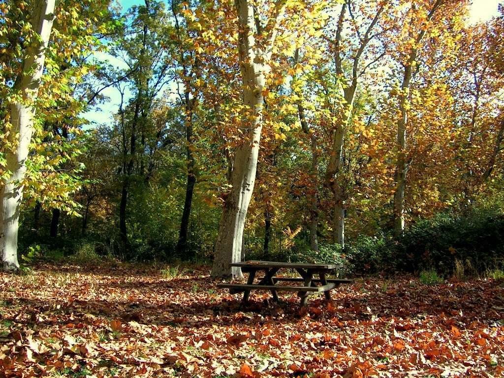 Sonbahardan Güzel Manzaralar - Sonbahar ve Piknik Masası