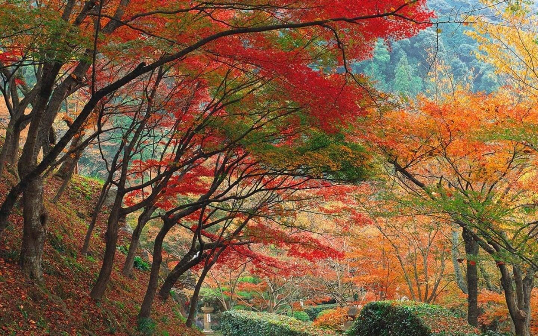 Sonbaharda Renk Uyumu