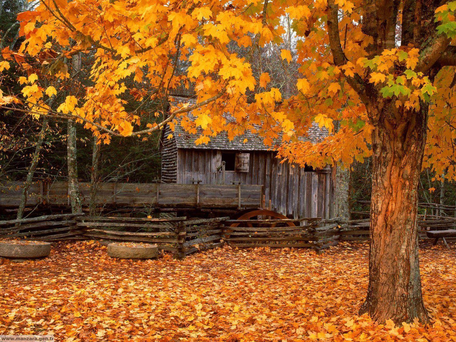 onbaharda Renklerin Cümbüşü ve Baraka