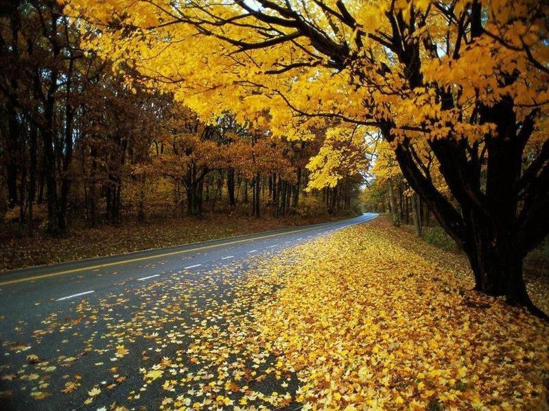 Sonbaharda Sarı Yapraklar ve Yol Manzarası