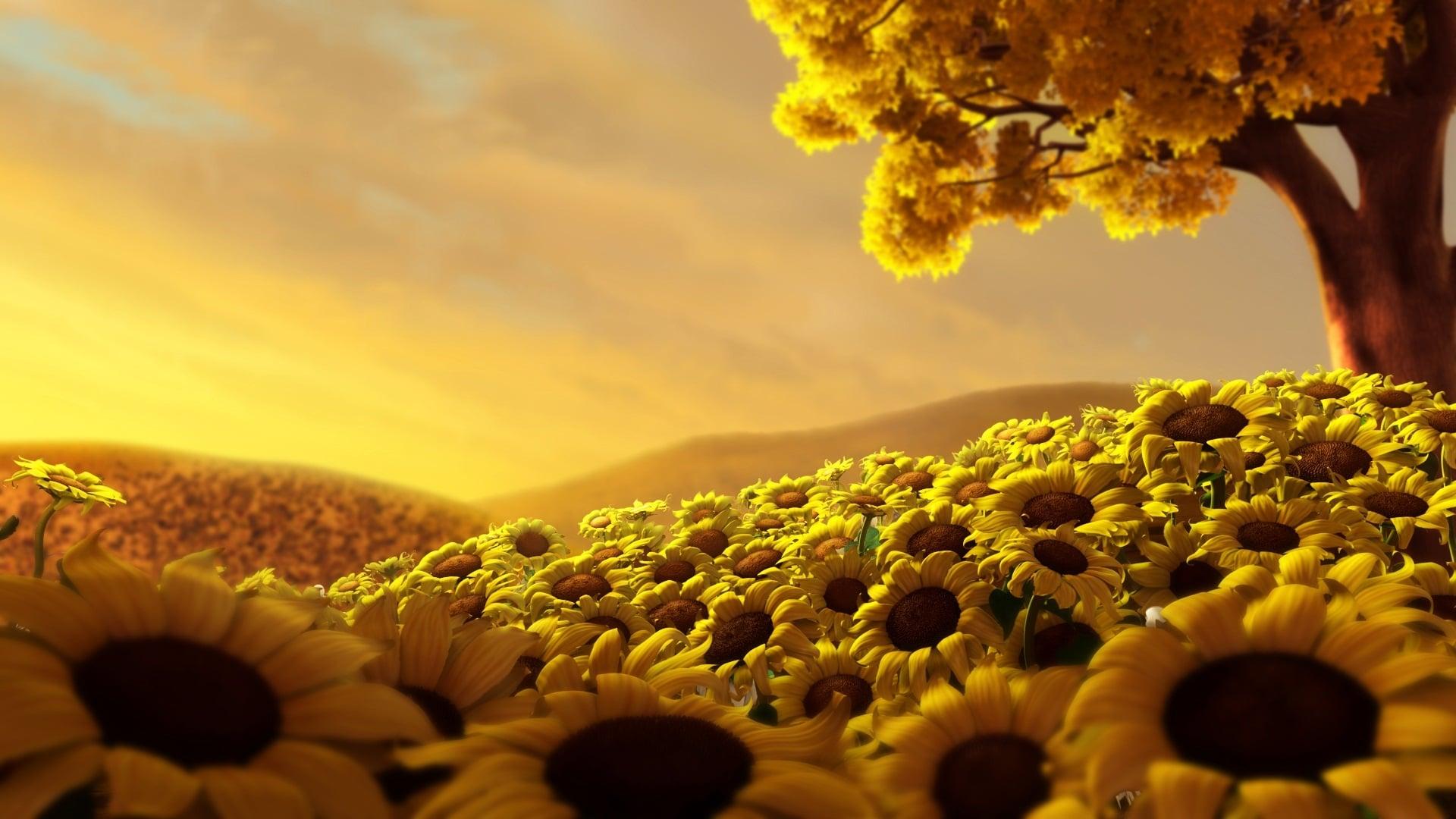 Sunflower Landscapes