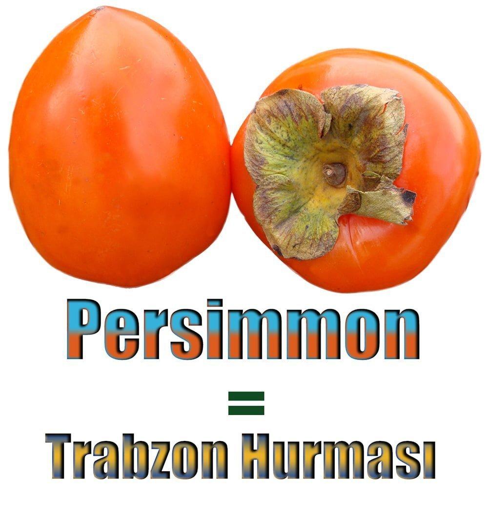 Trabzon Hurması İngilizcesi (Persimmon)