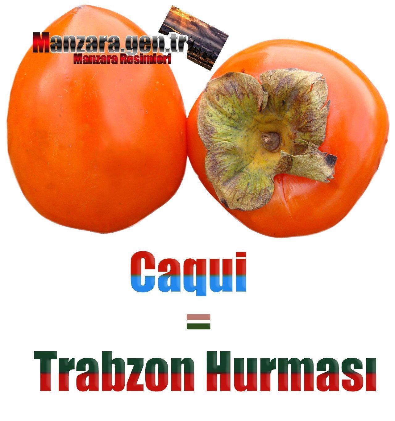 İspanyolca Meyve İsimleri - Trabzon Hurması İspanyolcası (Caqui)