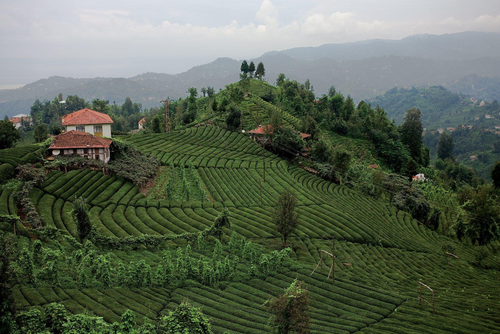 Türkiye'de çay bahçeleri