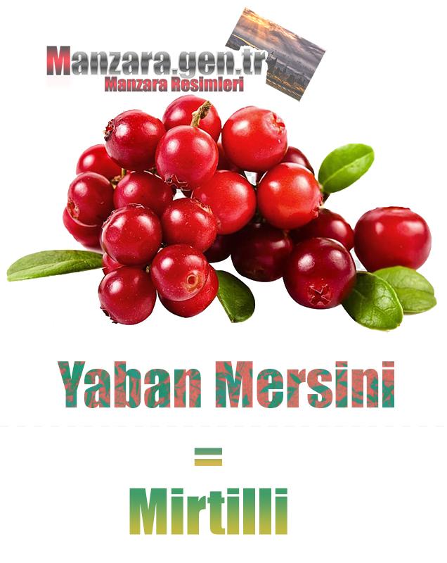 Yaban mersininin İtalyancası Nedir ? Yaban mersini Nasıl Yazılır ? Che cos'è il turco in mirtilli? Come scrivere mirtilli in turco?