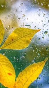 Yaprak ve Damlacıklar iPhone 6 Plus