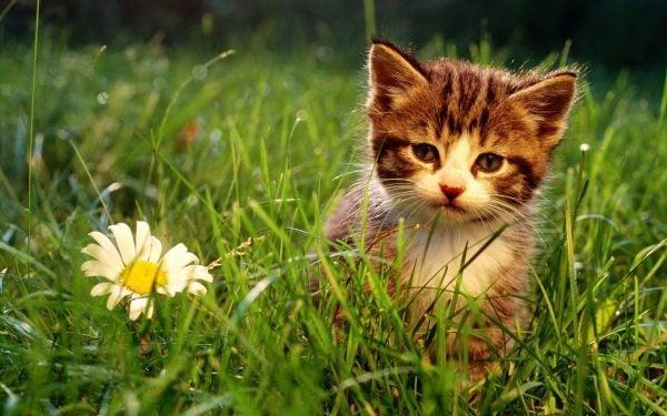 Kedilerin Farklı Halleri - Yavru Kedi Fotoğrafı