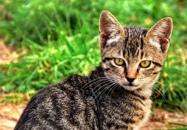 Yavru Kedi Yüzü