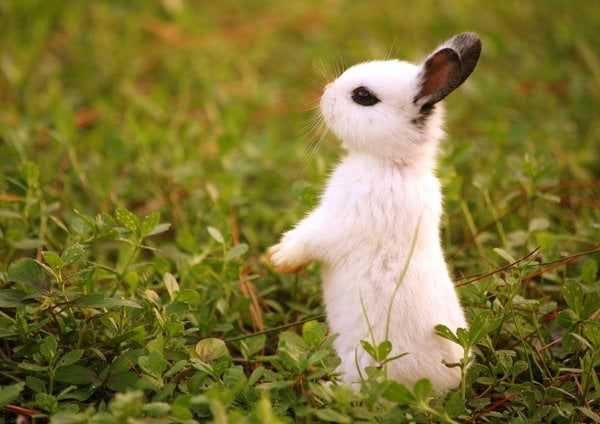 Yavru Sevimli Tavşan