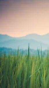 Yeşil Çim LG G3
