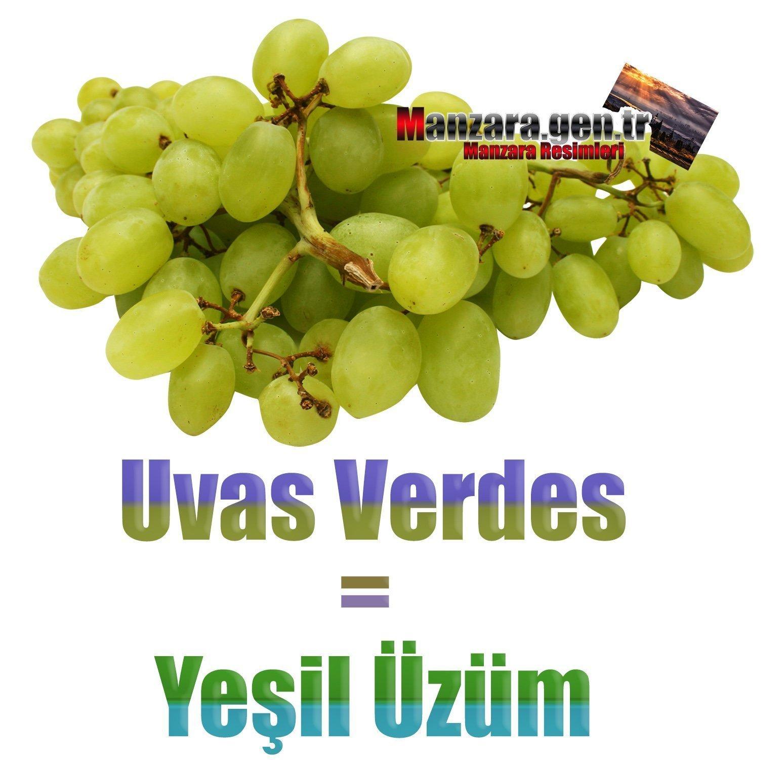 Yeşil Üzümün İspanyolcası (Uvas Verdes)