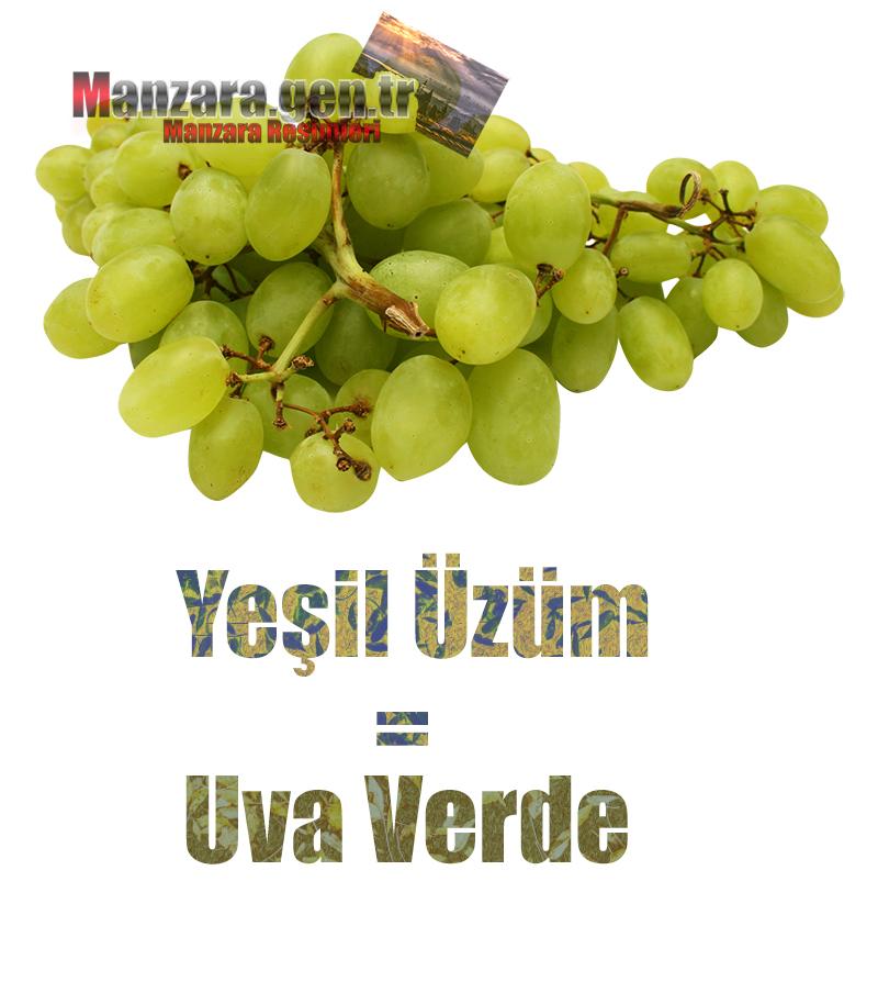İtalyanca Meyve İsimleri - Yeşil üzümün İtalyancası Nedir ? Yeşik üzüm Nasıl Yazılır ? Che cos'è il turco in uva verde? Come scrivere uva verde in turco?