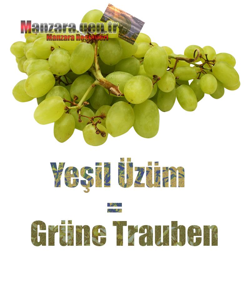 Almanca Meyve İsimleri - Yeşil Üzüm Almancası Nedir ? Yeşil Üzüm Almanca Nasıl Yazılır ? Was ist Schwarze Grüne Trauben Türkisch? Wie schreibe ich Schwarze Grüne Trauben auf Türkisch?