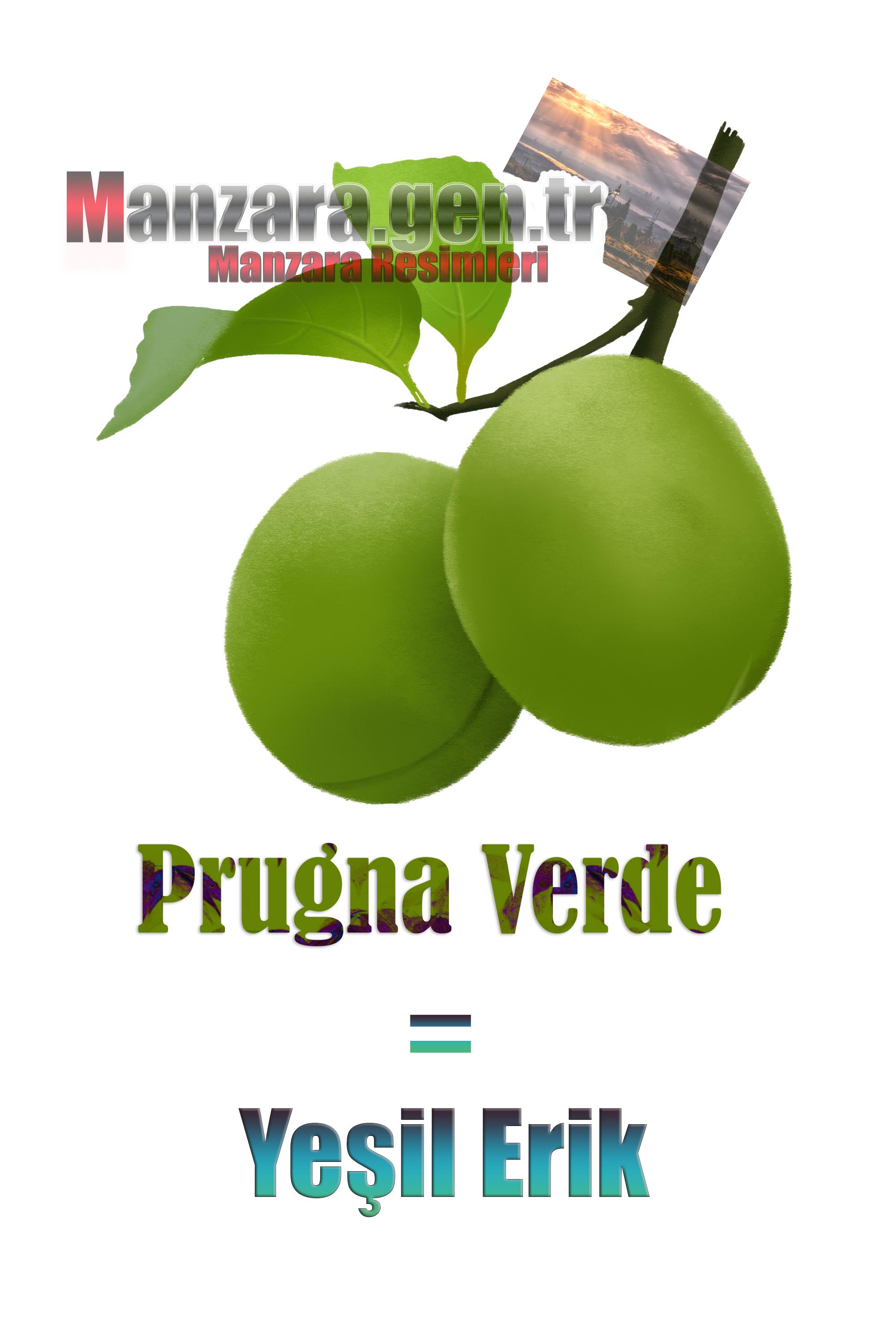 Yeşil eriğin İtalyancası Nedir ? Yeşik erik Nasıl Yazılır ? Che cos'è il turco in prugna verde? Come scrivere prugna verde in turco?