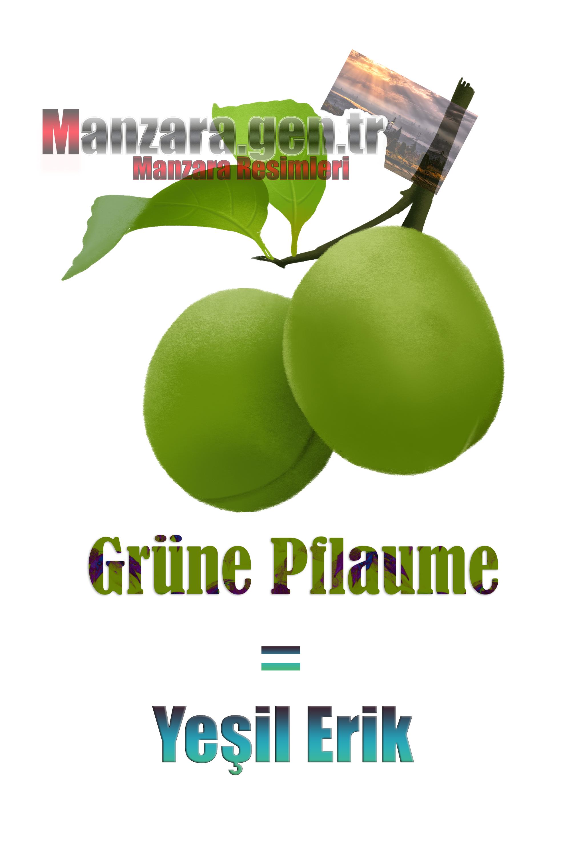 Yeşil Eriğin Almancası Nedir ? Yeşil Erik Almanca Nasıl Yazılır ? Was ist Schwarze Grüne Pflaume Türkisch? Wie schreibe ich Schwarze Grüne Pflaume auf Türkisch?