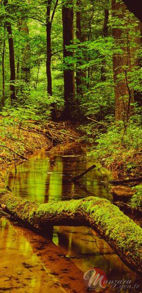 Yeşil Orman Manzarası Note 9 Duvar Kağıdı