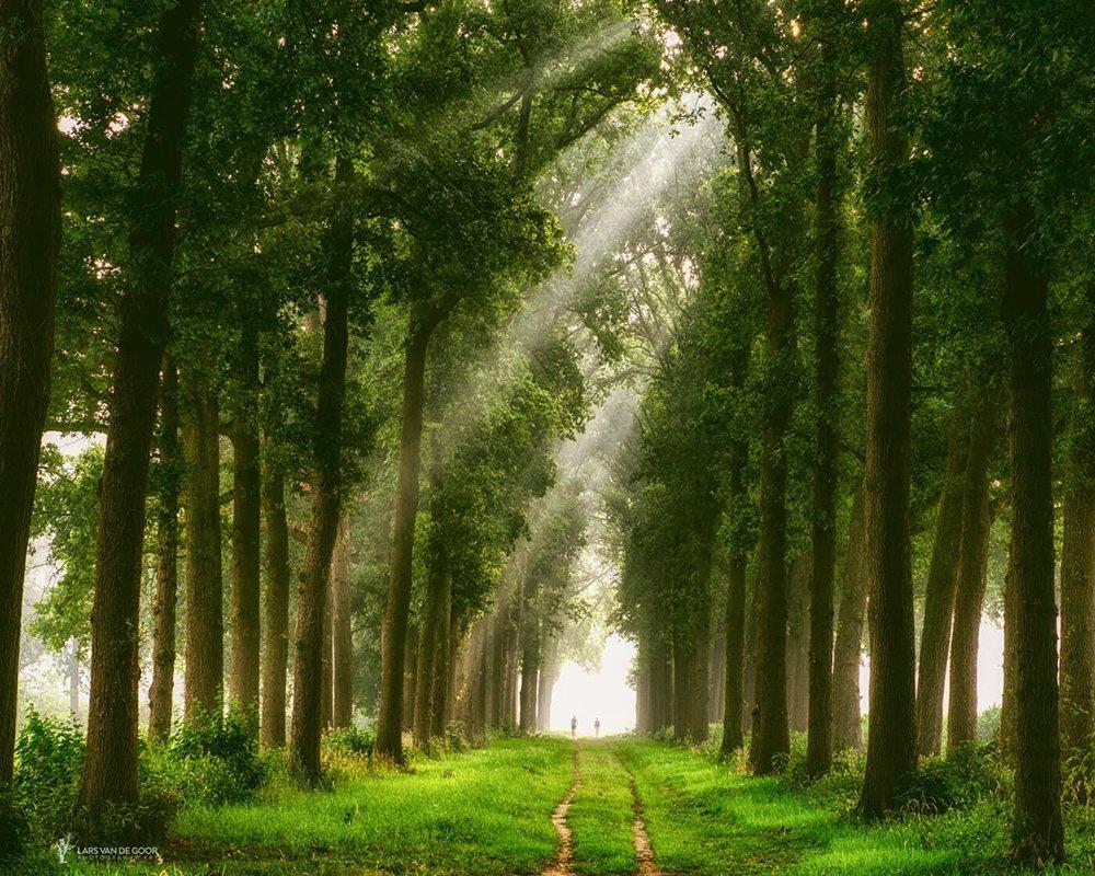 Yeşil Orman Yolu
