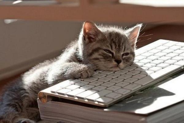 Yorgun Kedi