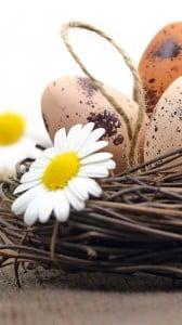 Yumurtalar 1080x1920