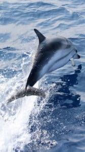 Yunus Balığı 1080x1920