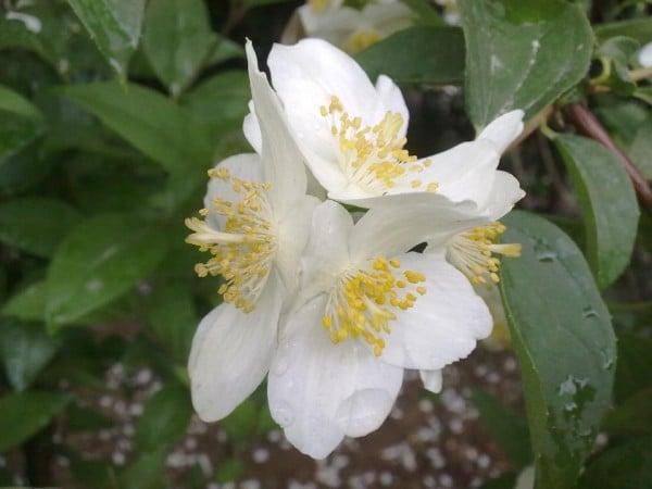 ağaç dalındaki beyaz çiçek