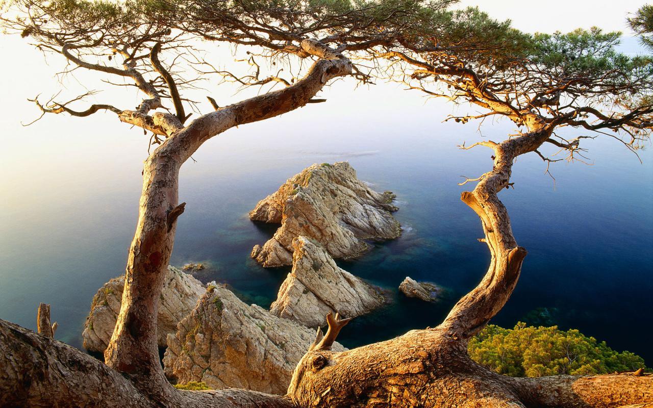 Ağaçlar ve deniz