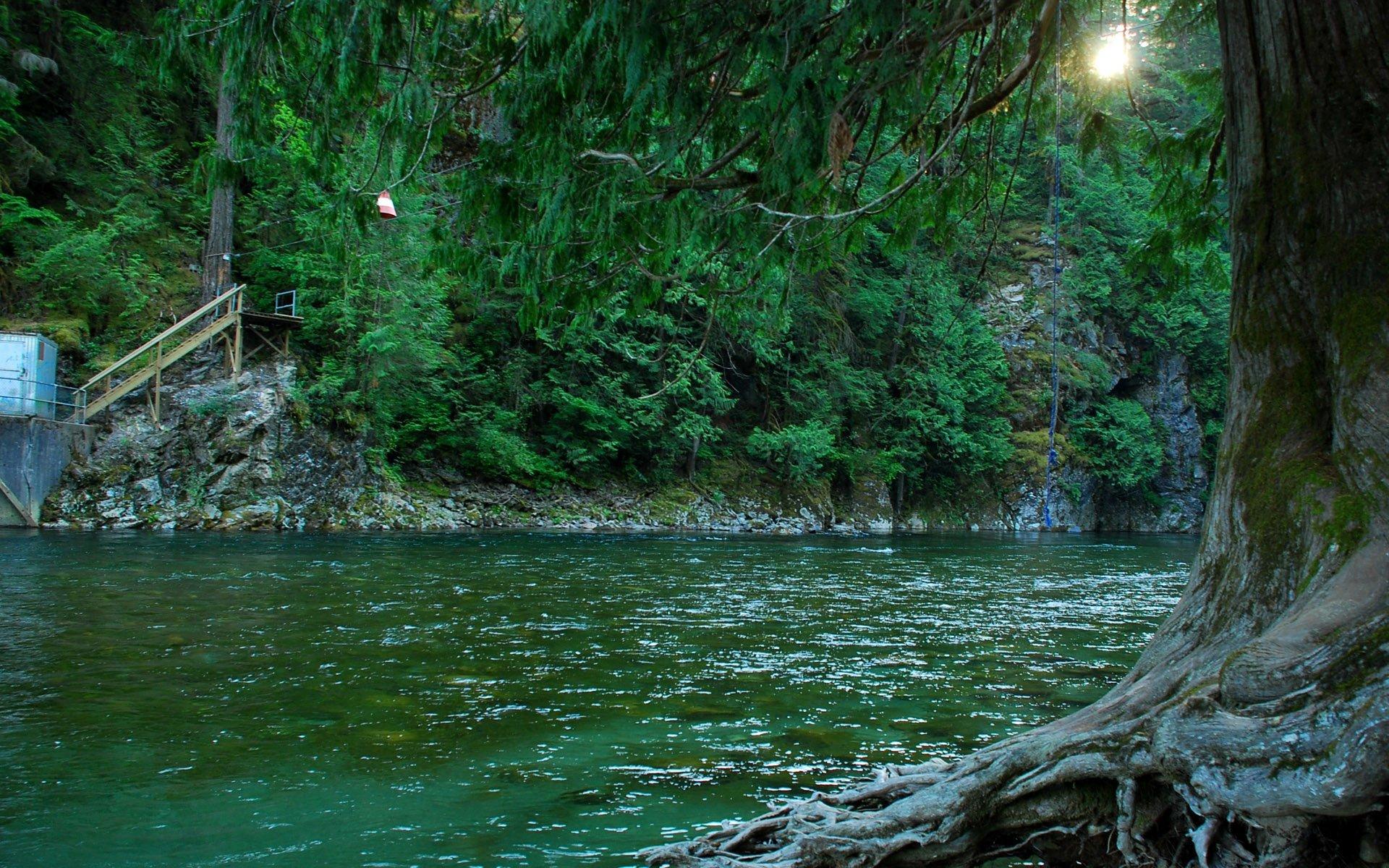 ağaçlar ve göl