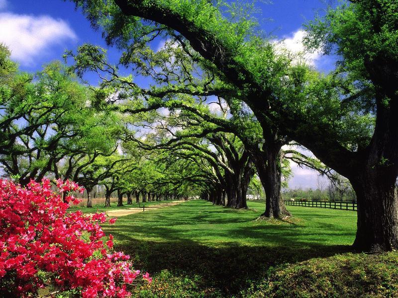 ağaçlar ve yeşillik