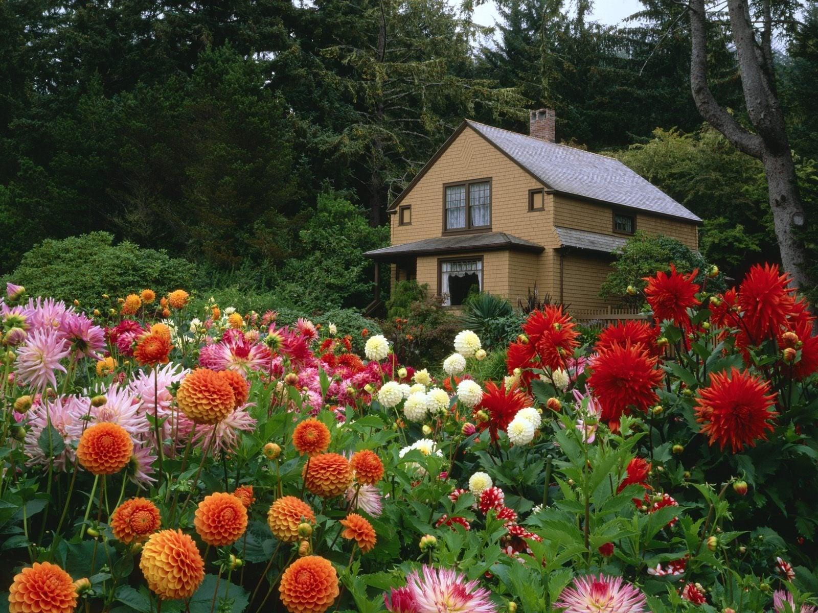 Renkli bahçeler-4