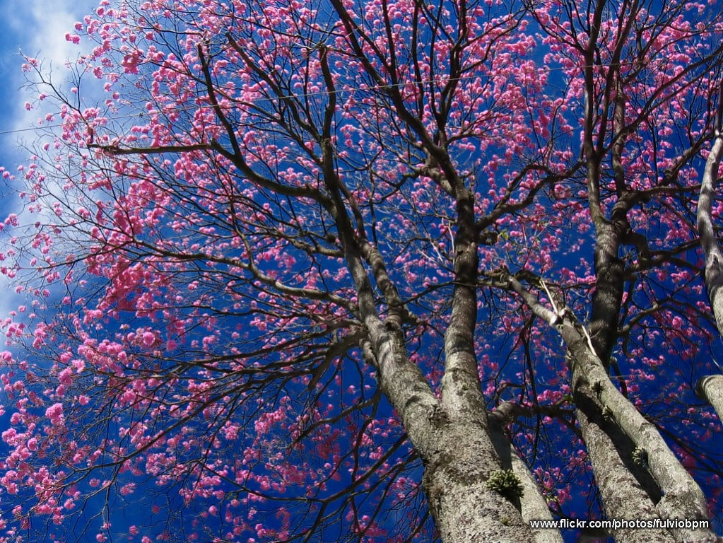 Ağaç ve gökyüzü