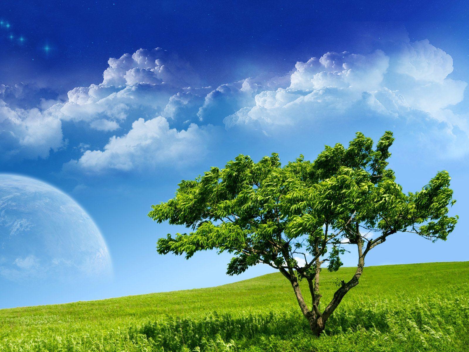 Ağaçlar-2