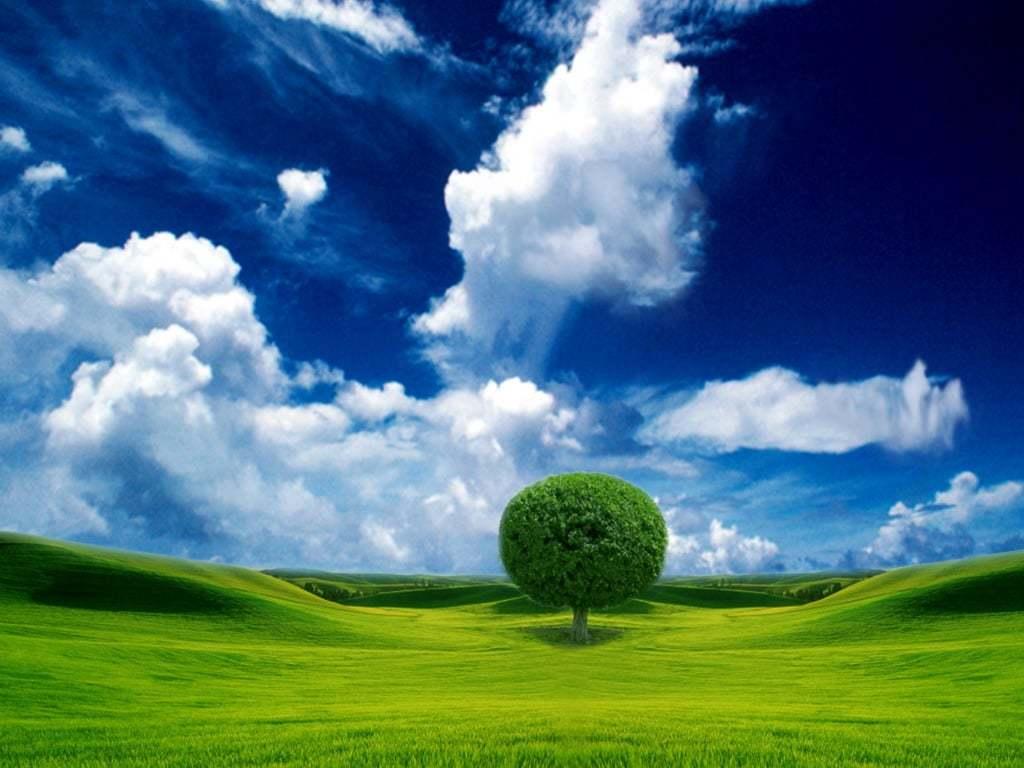 Ağaçlar-3