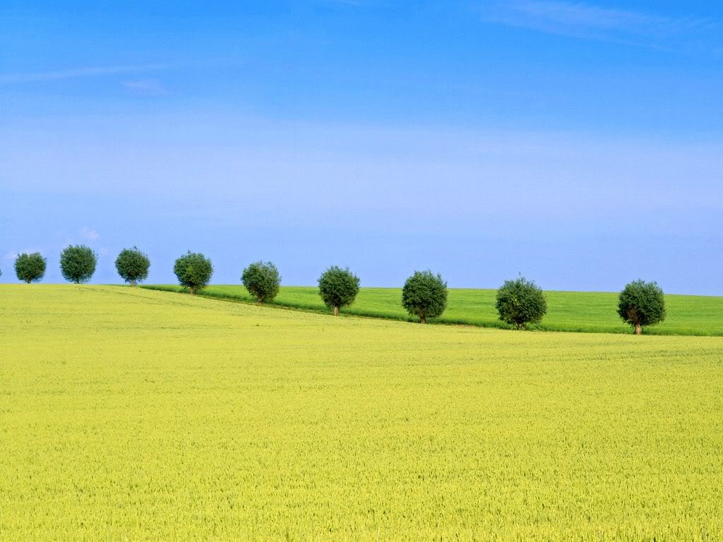 Ağaçlar-4