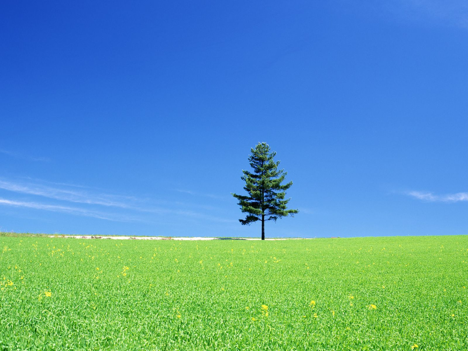 Ağaçlar-5