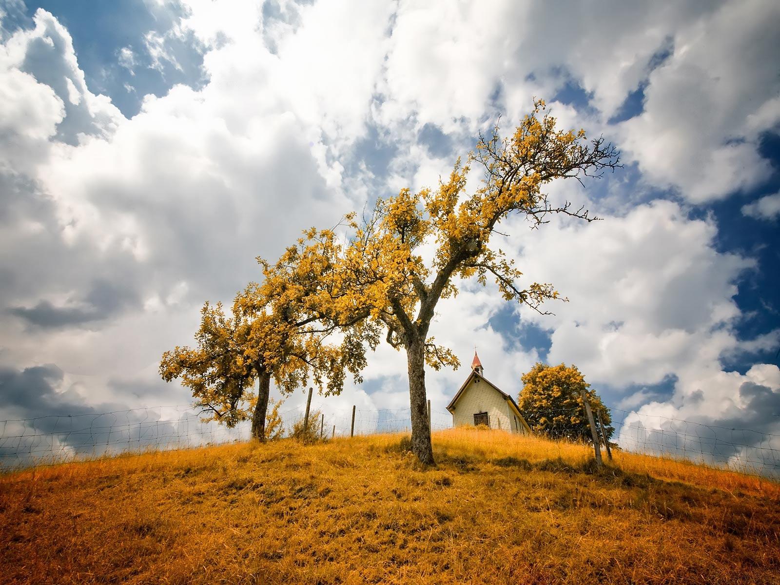 Ağaçlar ve manzara-2