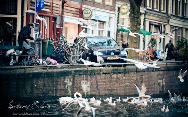 Amsterdam martılar