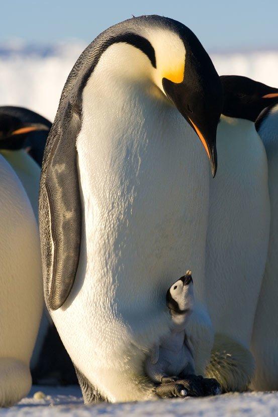 anne penguen