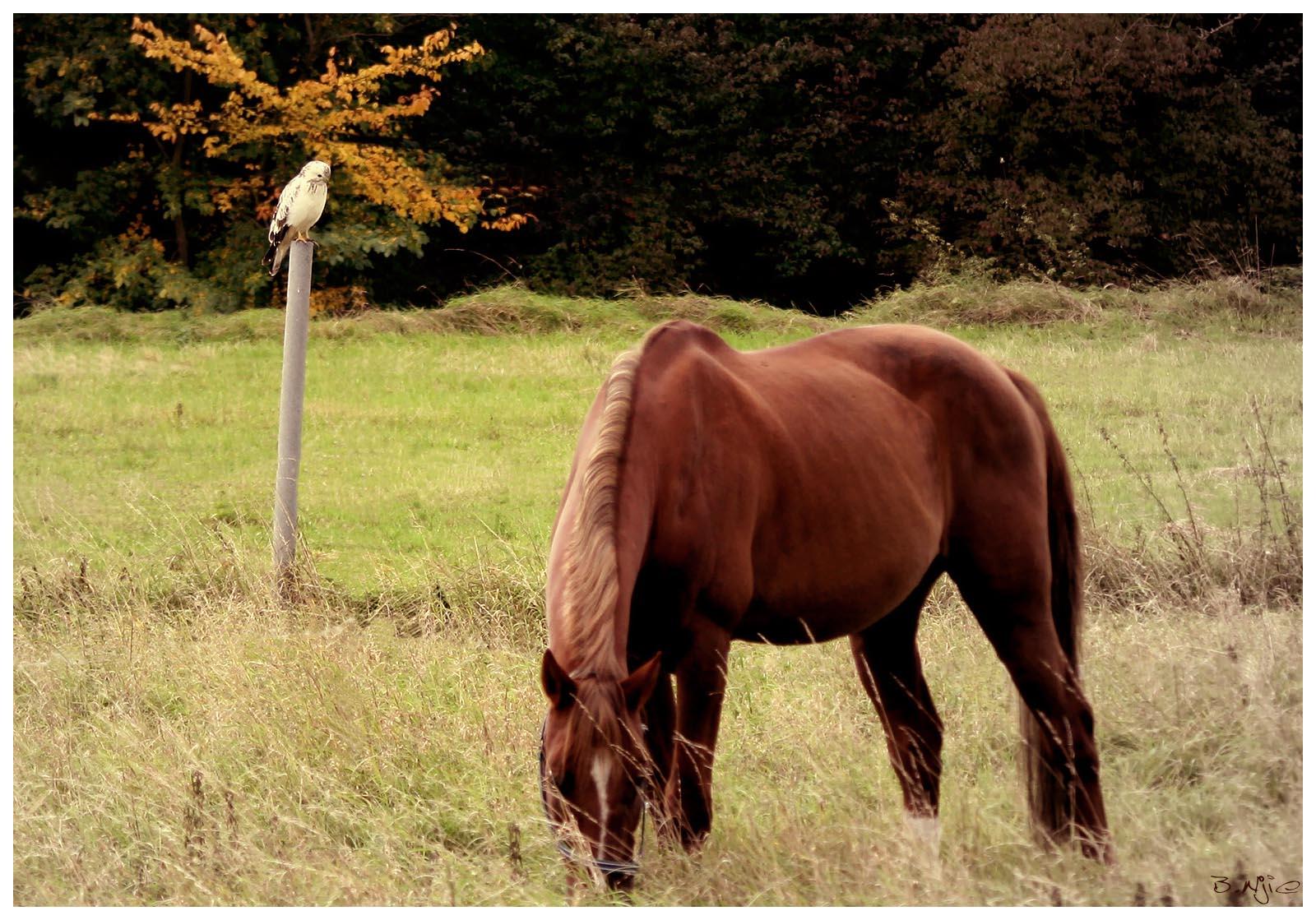 İnsanlar ve Atlar