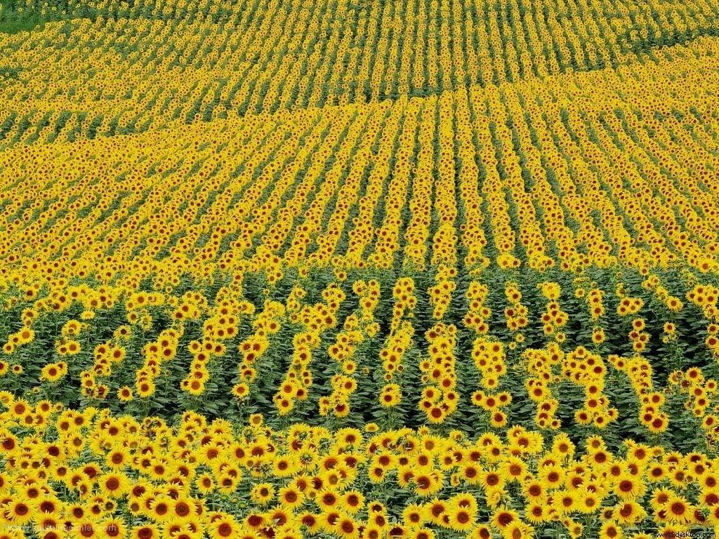 Çiçekli manzaralar-51