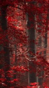 büyülü orman 1080x1920